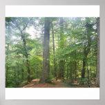 Bosque en New Hampshire Posters