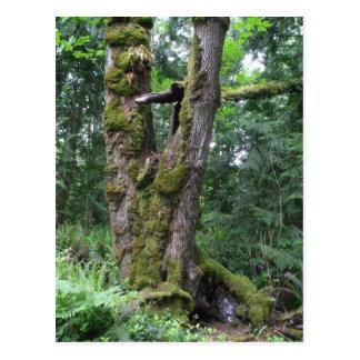 Bosque en verde postal