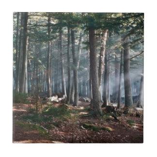 Bosque encantado azulejo cuadrado pequeño