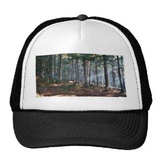 Bosque encantado gorra