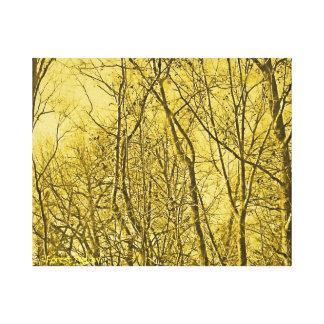 Bosque encendido lona estirada galerias