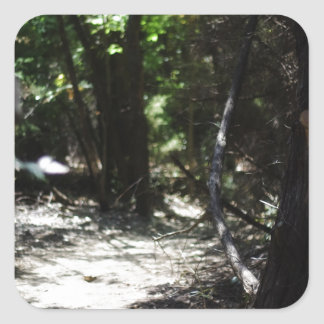 Bosque espeluznante calcomania cuadradas