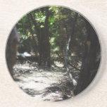 Bosque espeluznante posavasos personalizados