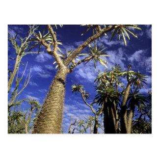 Bosque espinoso formado de los árboles de tarjeta postal