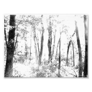 Bosque fantasmal fotografías