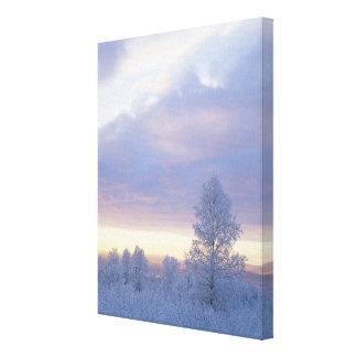 Bosque Frost-Cubierto Impresión En Lienzo