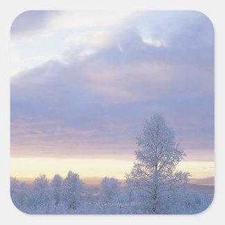 Bosque Frost-Cubierto Pegatina Cuadrada