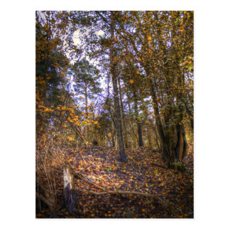 Bosque HDR del otoño Postales