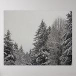 Bosque hivernal impresiones