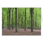 Bosque holandés tarjeta
