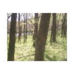 Bosque Impresion De Lienzo