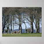 Bosque knarly de árboles viejos en la primavera - póster