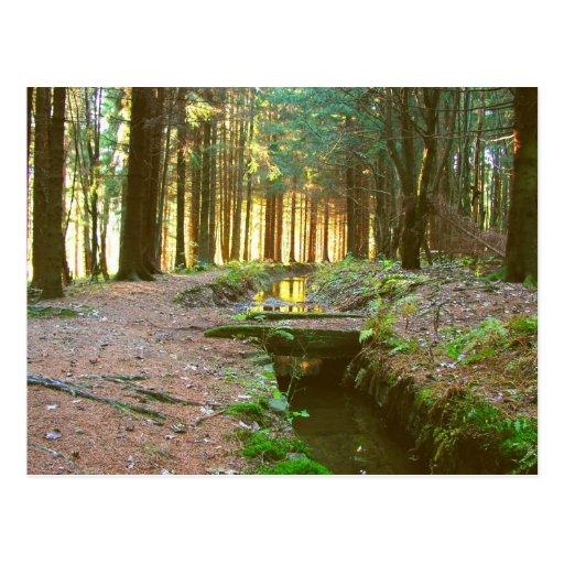 bosque mágico tarjetas postales