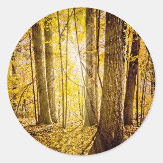 Bosque místico etiqueta