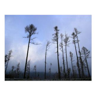 Bosque muerto tarjeta postal