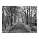 Bosque, negro/blanco postales