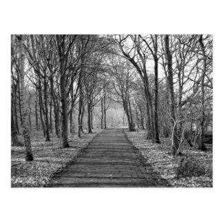 Bosque, negro/blanco tarjetas postales
