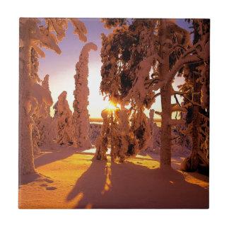 Bosque nevado Finlandia del árbol Azulejo