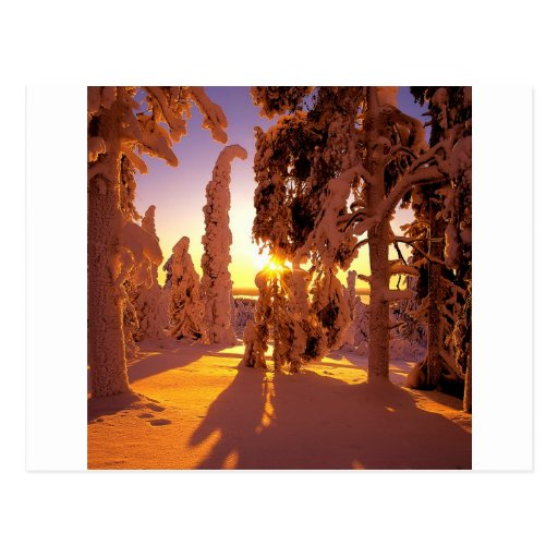 Bosque nevado Finlandia del árbol Postal