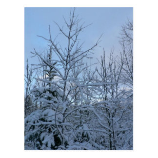 Bosque Nevado Postal
