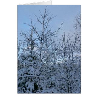 Bosque Nevado Tarjeta De Felicitación