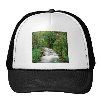 Bosque Oregon de Mckenzie Willamette del río Gorro De Camionero