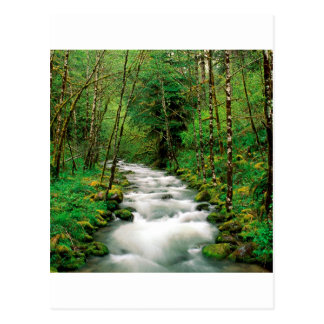 Bosque Oregon de Mckenzie Willamette del río Postal
