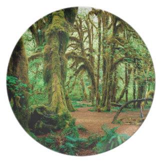 Bosque Pasillo de los musgos olímpicos Plato Para Fiesta