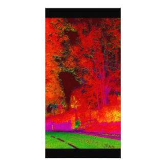 Bosque que brilla intensamente a lo largo de la ta tarjetas fotográficas personalizadas