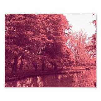 Bosque rojo fotografías