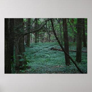Bosque silencioso posters