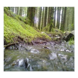 Bosque y agua fotografía