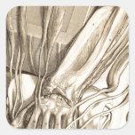 Bosquejo anatómico de la mano pegatinas cuadradas