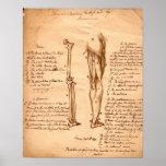 Bosquejo anatómico impresiones