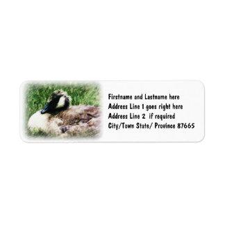 Bosquejo canadiense de la foto del ganso del bebé etiqueta de remite