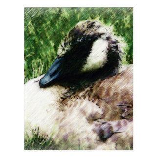 Bosquejo canadiense de la foto del ganso del bebé postales