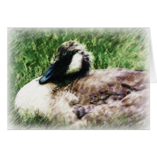 Bosquejo canadiense de la foto del ganso del bebé tarjeta de felicitación
