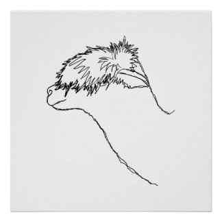 Bosquejo de la alpaca póster
