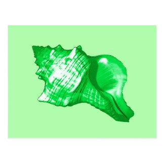 Bosquejo de la cáscara de la concha - esmeralda y postales