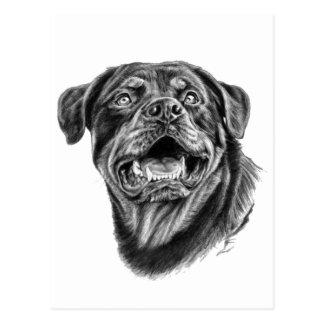 Bosquejo de Rottweiler Tarjeta Postal