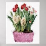 Bosquejo de tulipanes rojos y de jacintos blancos  posters
