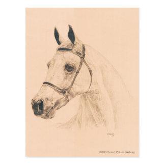 Bosquejo del caballo de Susan Pelisek Kolberg Postales