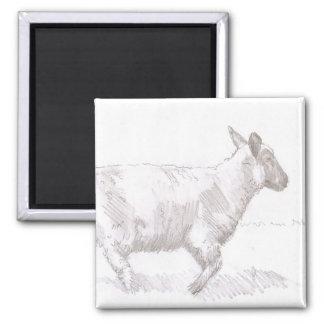 bosquejo del lápiz de las ovejas que camina imanes para frigoríficos