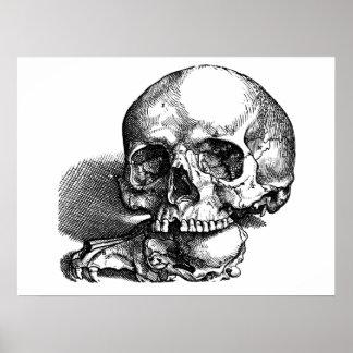 Bosquejo del vintage del cráneo y de las quijadas impresiones