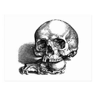 Bosquejo del vintage del cráneo y de las quijadas postales