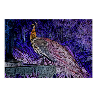 bosquejo púrpura del pavo real invertido impresiones