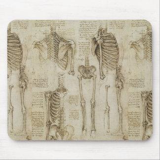Bosquejos esqueléticos humanos de la anatomía de d