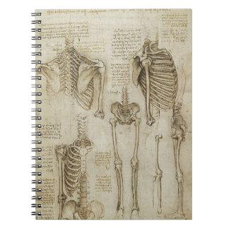 Bosquejos esqueléticos humanos de la anatomía de libro de apuntes con espiral