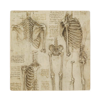 Bosquejos esqueléticos humanos de la anatomía de