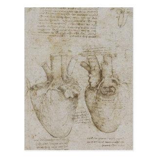 Bosquejos humanos de la anatomía del corazón de da tarjeta postal